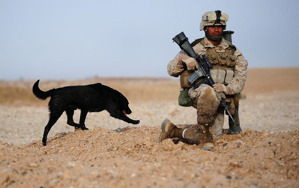 Bomb sniffer dog Corporal Ace seaches fo