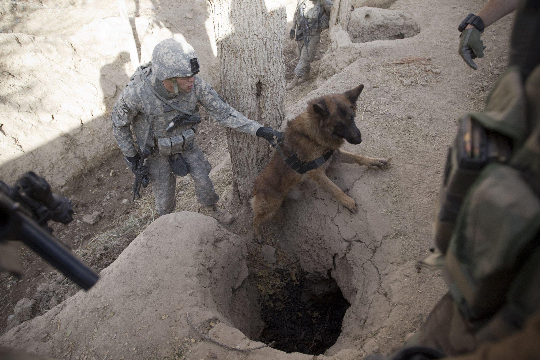 Basco from Patrol Explosive Detector Dog