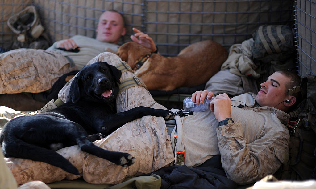 Military police US Marines and their dogs