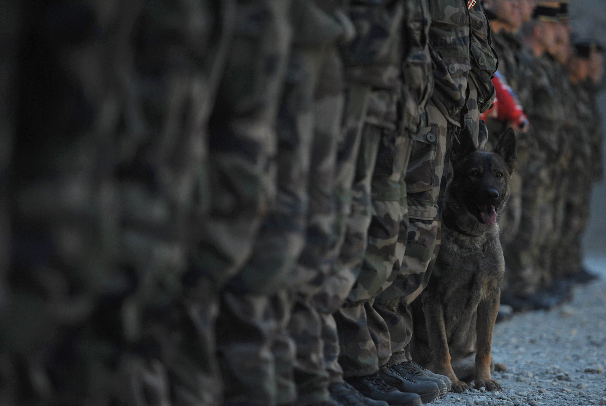 French soldiers stand with military dog