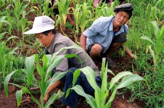 Two farm workers in a North Korean field.