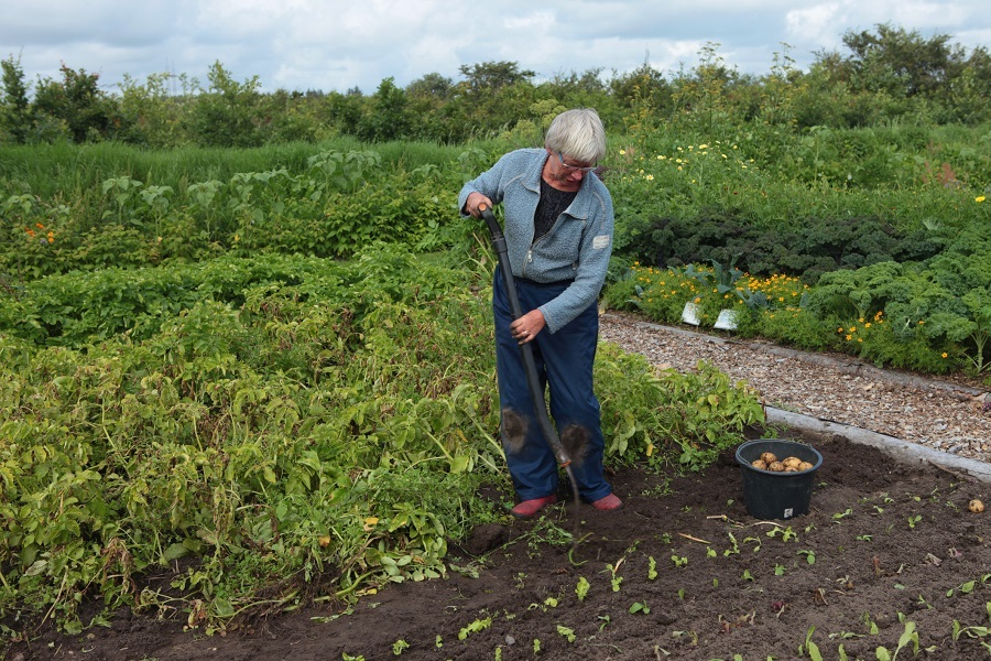 Senior woman digging in a large garden