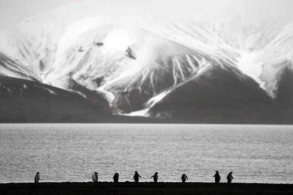 Penguins on Antarctic peninsula