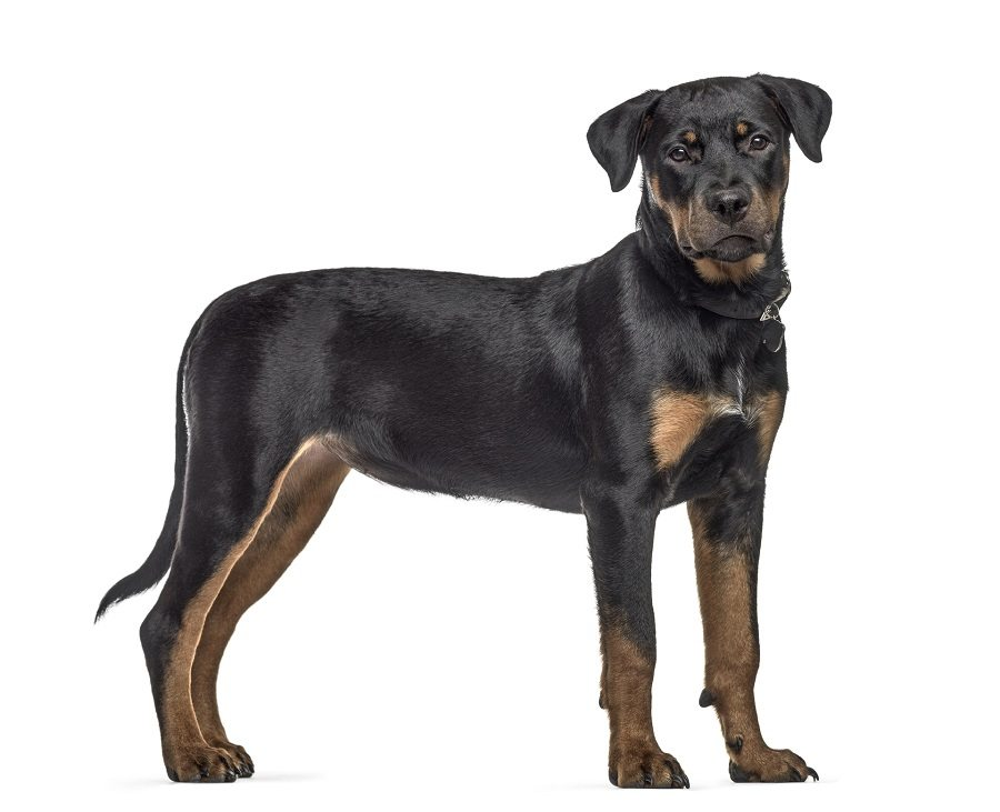 Match Dog Breed To Owner