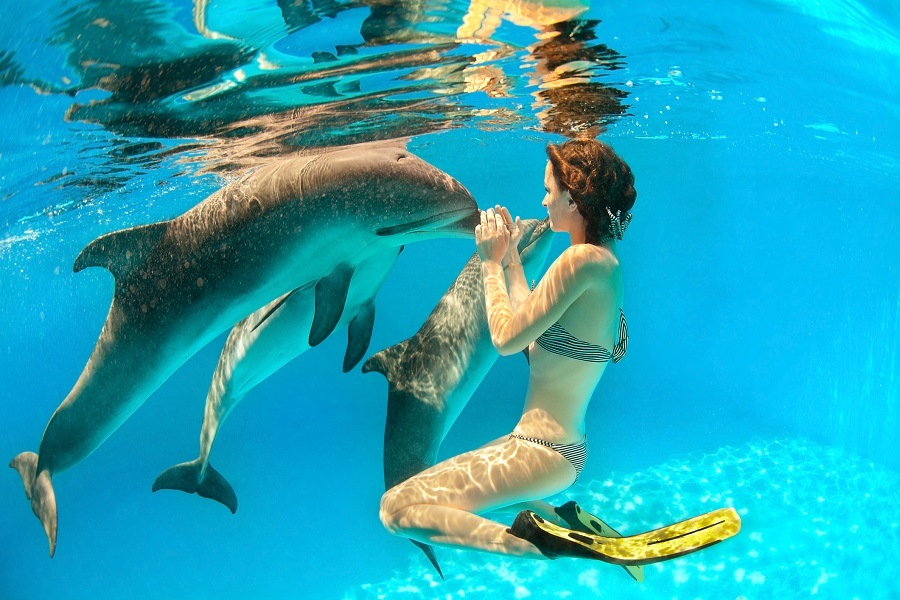 swiming with dolphins