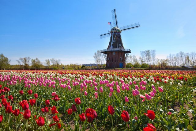 Wooden windmill in Holland, Michigan