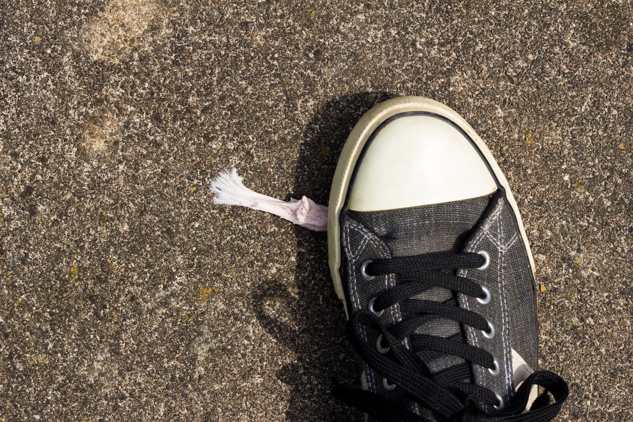 Chewing Gum and Shoe