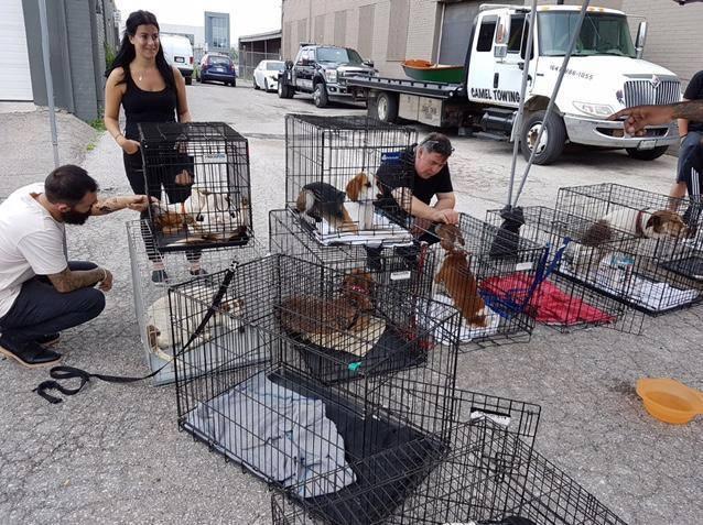 A dog's dream rescue adoption