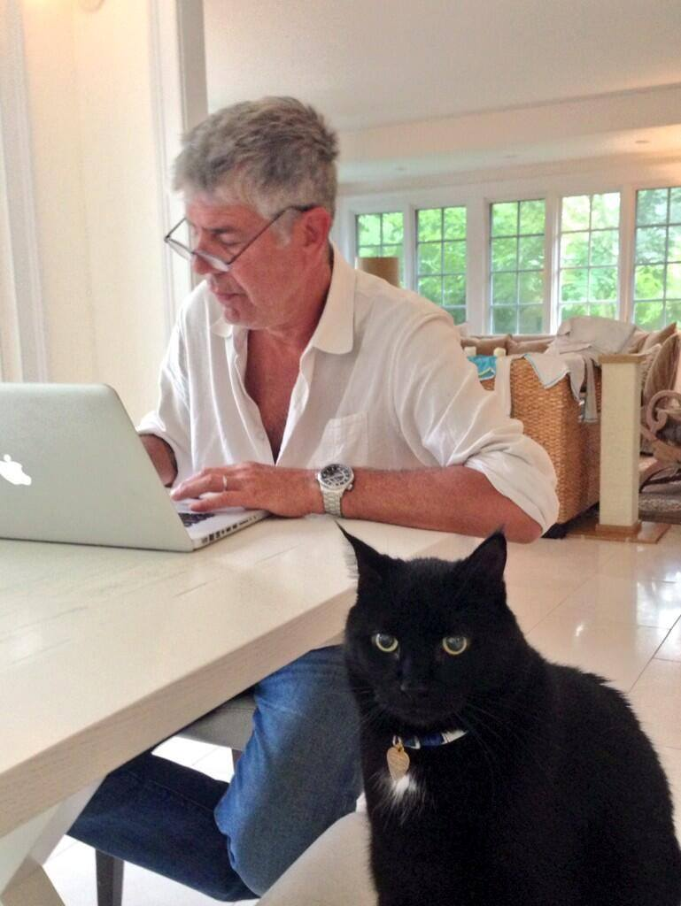 Anthony Bourdain cat