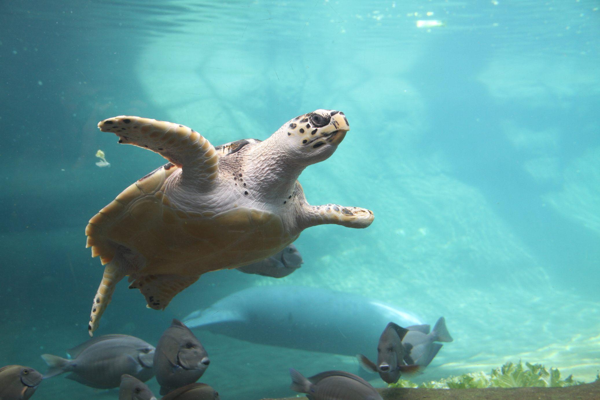 Turtle at Columbus Zoo and Aquarium