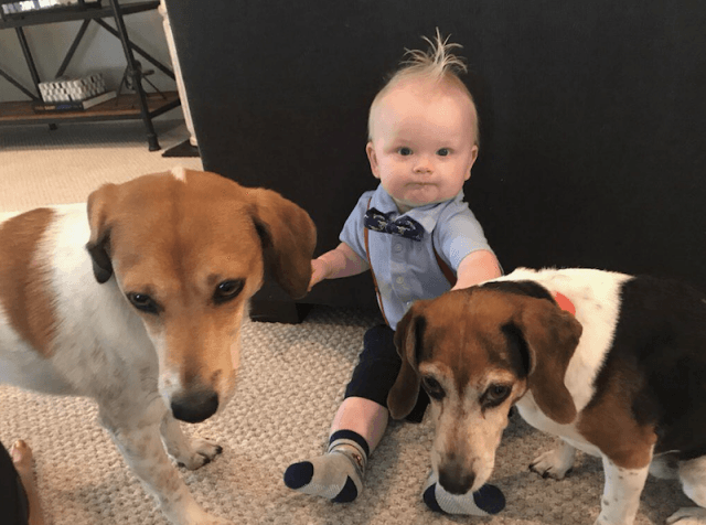 Luke Trump and the family dogs.