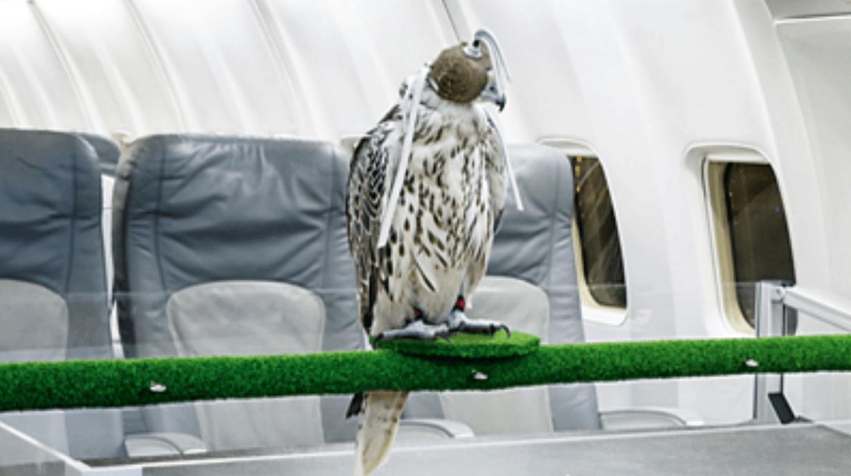 Falcon master