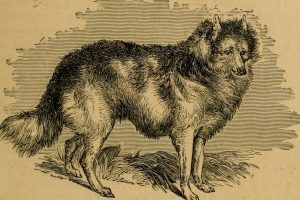 Extinct Dog Breeds You've Gotta See to Believe