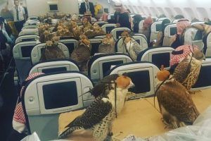 The 1 Powerful Pet You Never Thought You'd See Fly First Class