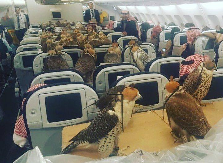 Hawks reddit airplane