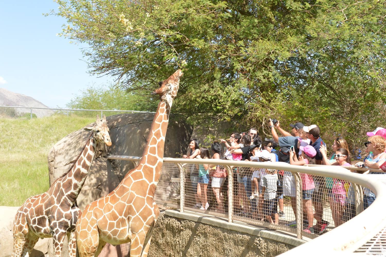Living Desert zoo