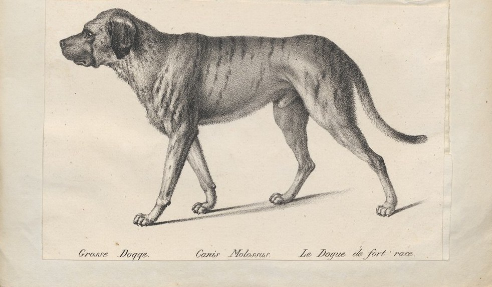 Extinct Dog Breeds Youve Gotta See To Believe