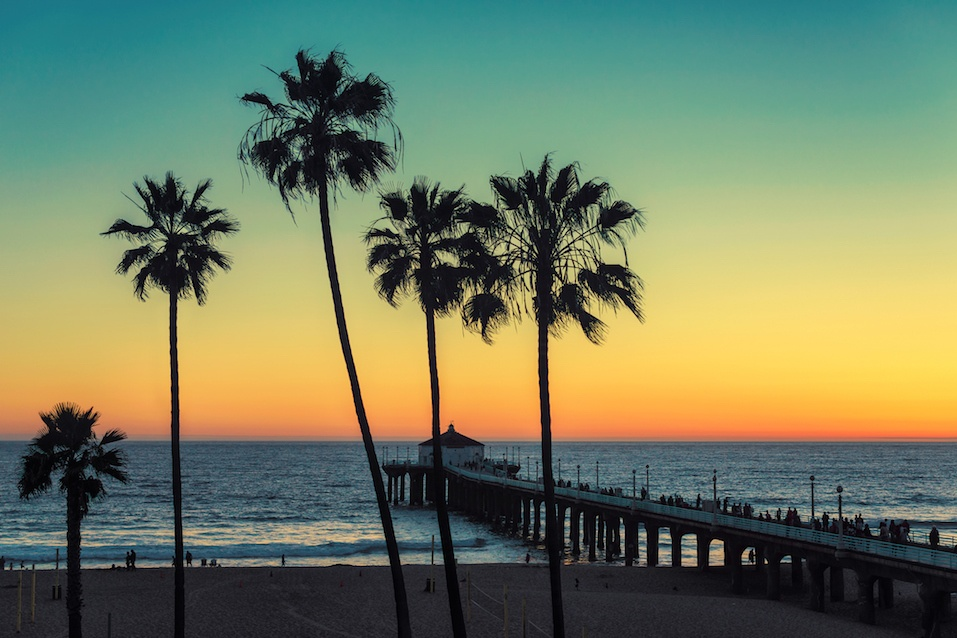Palm trees at Manhattan Beach