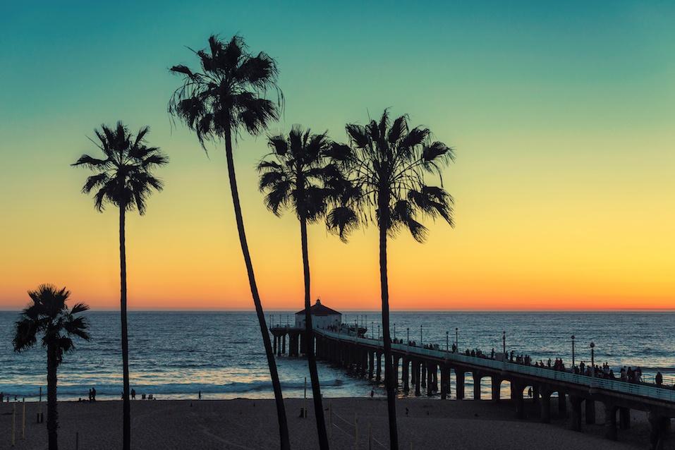 Palm trees at Manhattan Beach