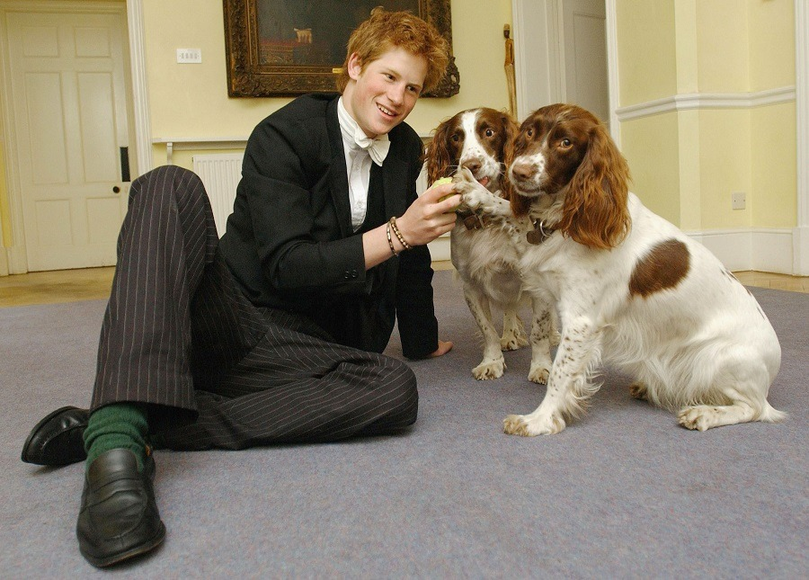 Prince Harry plays with Rosie and Jenny, the dogs owned by Andrew Gailey - the housemaster of the Manor House