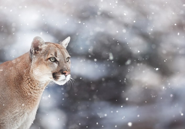 Survivors Reveal What It's Really Like to Be Attacked by a Mountain Lion