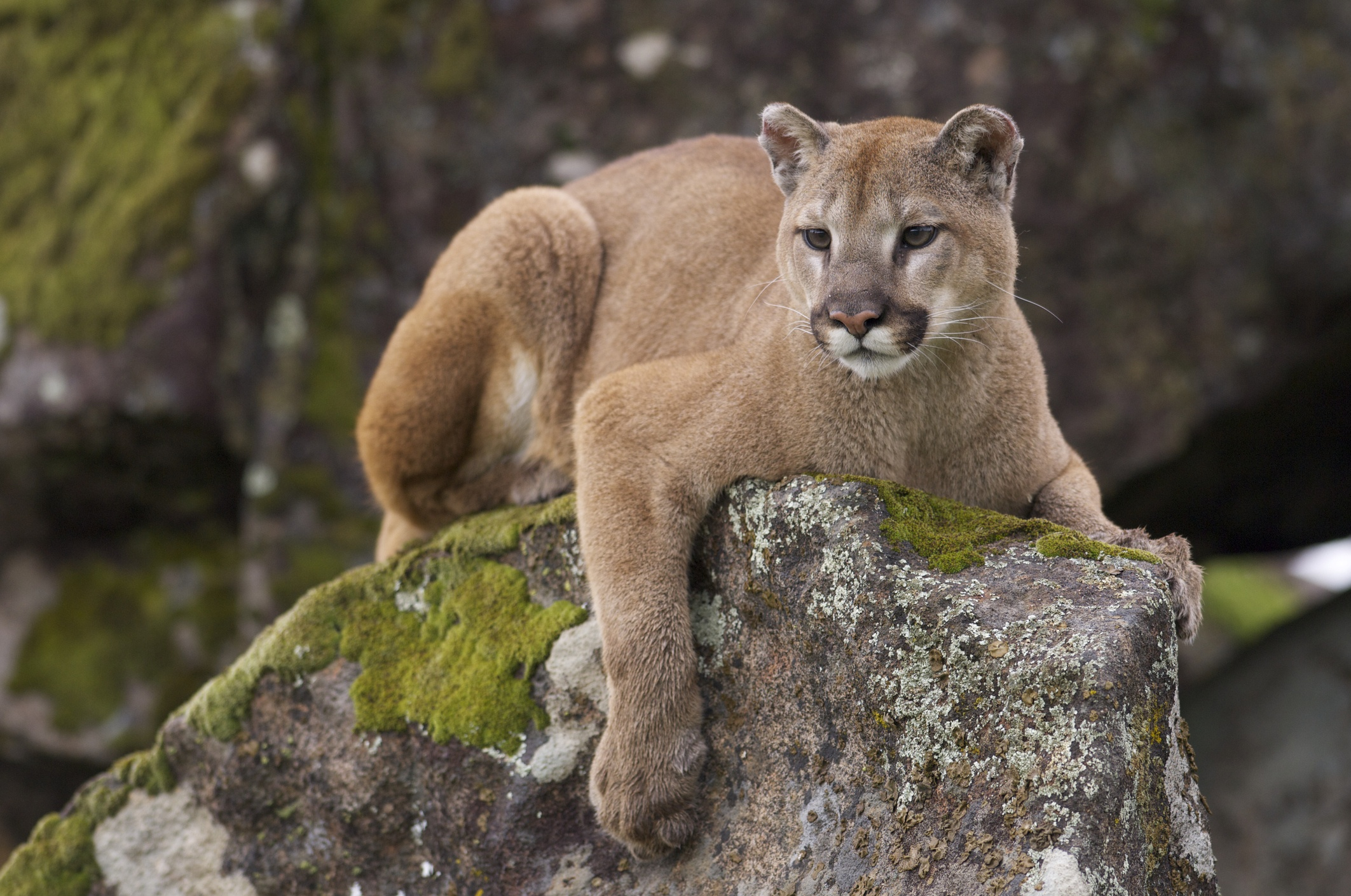 07aefaf38b6b Survivors Reveal What It s Really Like to Be Attacked by a Mountain Lion