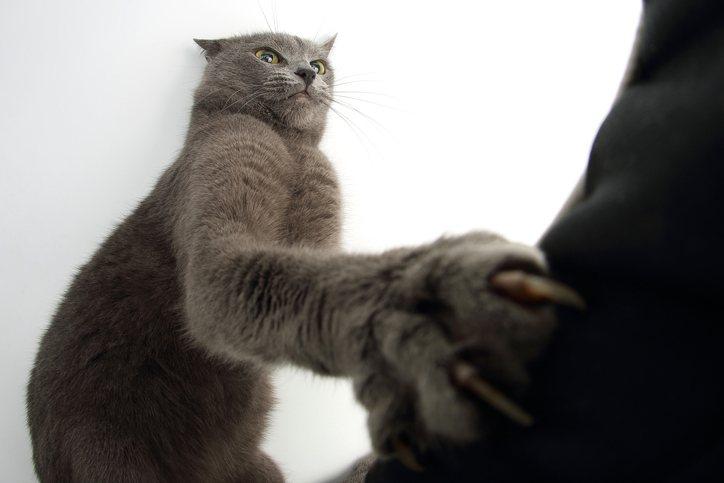 cat scratch claws