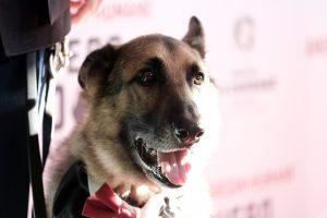 The Most Heroic Dogs of All Time and Their Heartwarming Tributes