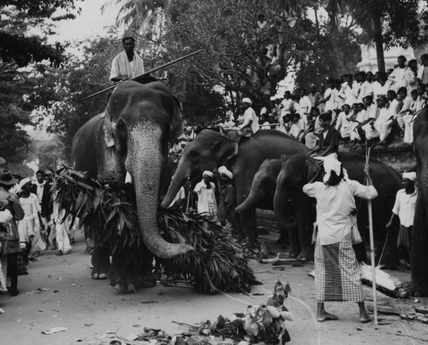 Elephants and their trainers arrive for a Raja Perahera ceremony to welcome Queen Elizabeth II on her Royal Tour in Ceylon