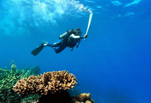 Wendy Craig Duncan carries the Olympic Torch underwater in the Great Barrier Reef