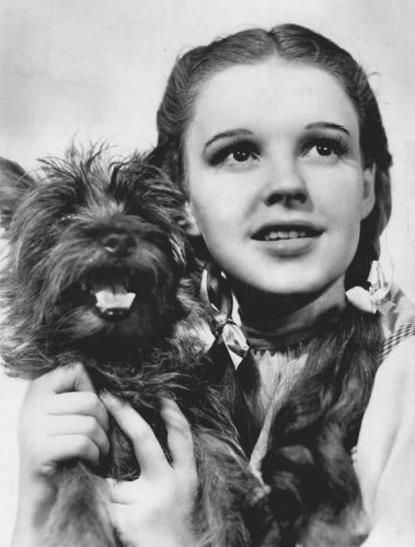 Judy Garland The Wizard of Oz