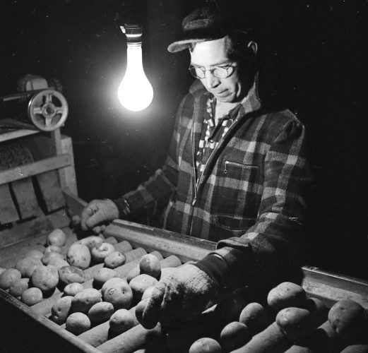 An American farmer sorts the good from the bad on the 'spud line'