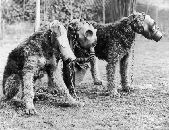 Gas masks for dogs