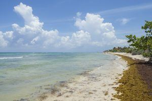 Why Is There so Much Seaweed in Cancún Right Now? What You Need to Know About The Current Seaweed Conditions in Mexico