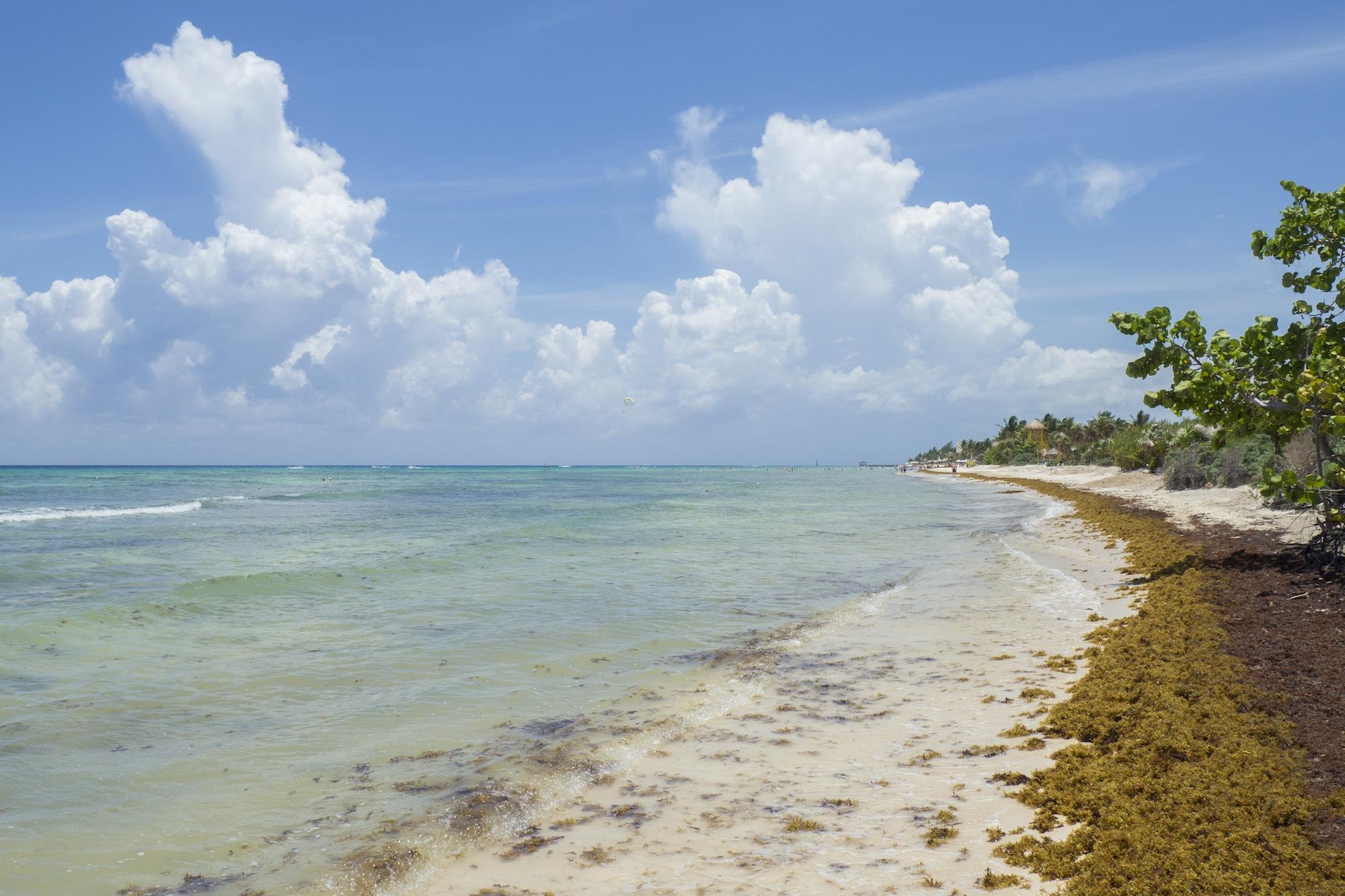 seaweed in Cancun
