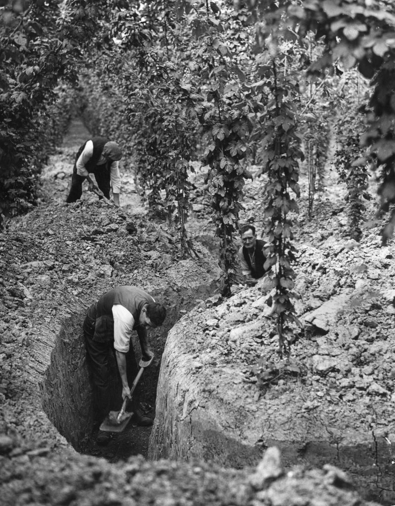 Men digging trenches to be used as air raid shelters during World War II