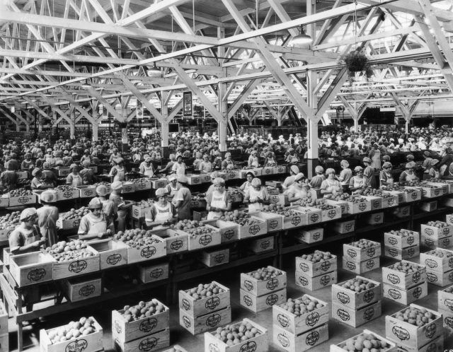 Workers prepare peaches at a Del Monte canning factory