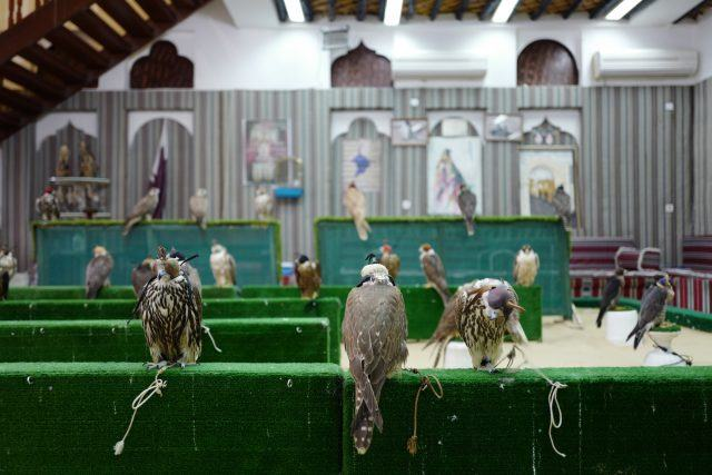 Falcons at the Souq Waqif