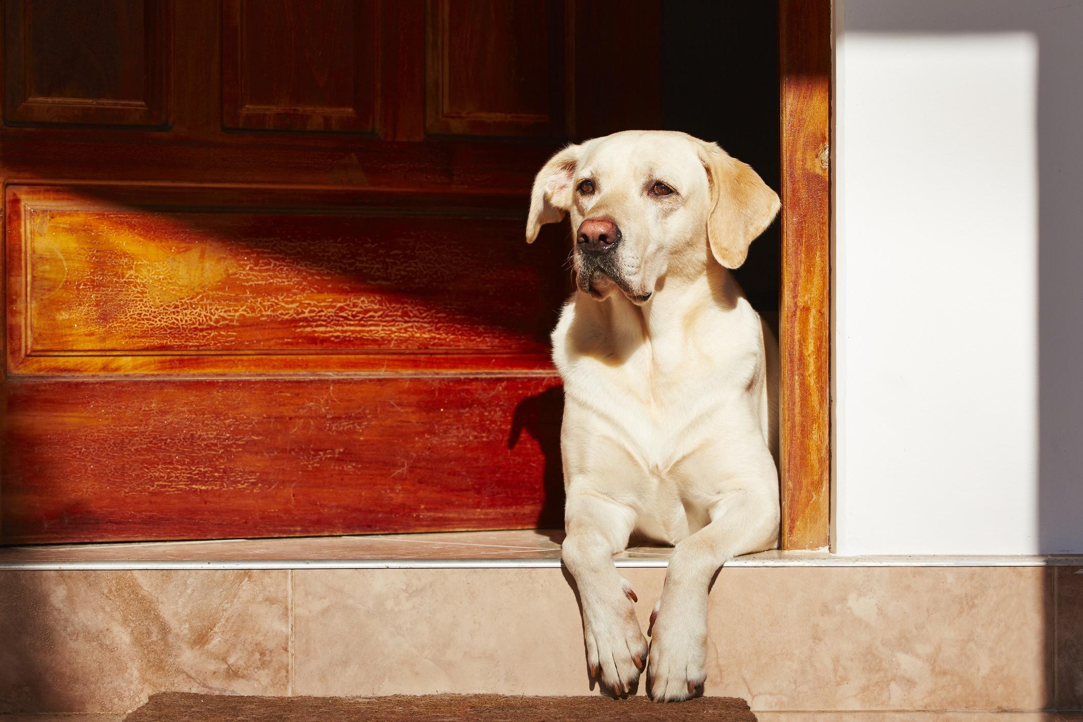 Dog opens door