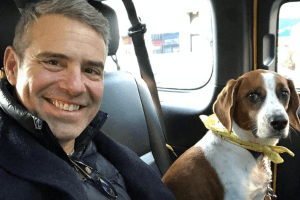 What is Andy Cohen's Net Worth?