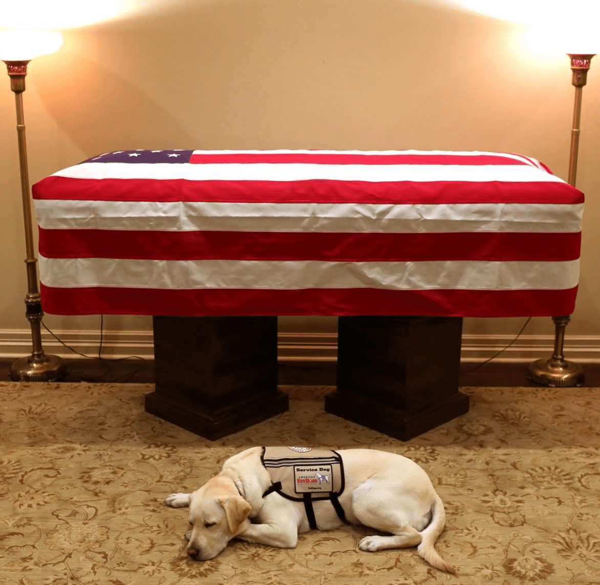 How Much Does It Cost To Train a Service Dog?