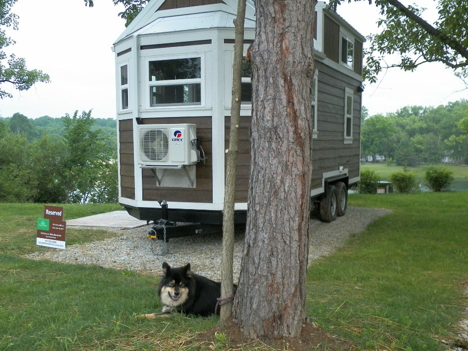 Tiny home with dog