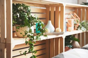 These Houseplants Offer Surprising Health Benefits