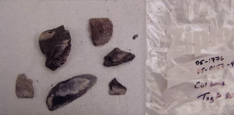 Bone fragments