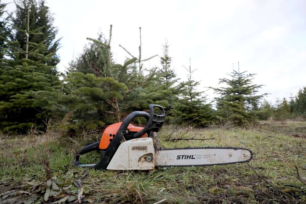 Chainsaw in forest