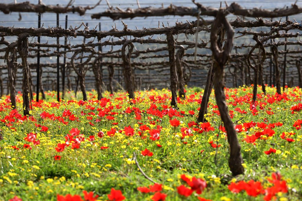 Vines are contrasted by a carpet of colorful wildflowers
