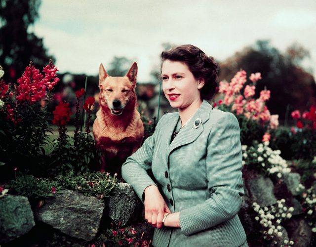 Queen Elizabeth II and corgi.