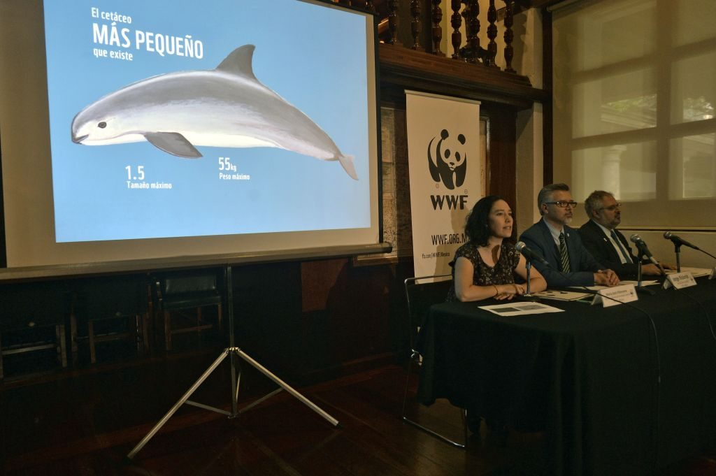 Press conference for the vaquita