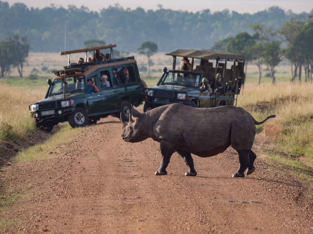 Rhino walking in front of a tour group