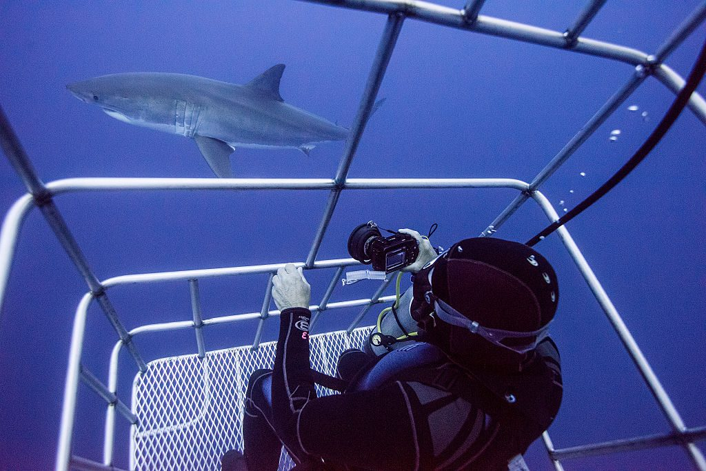 Diver in a cage photographing sharks